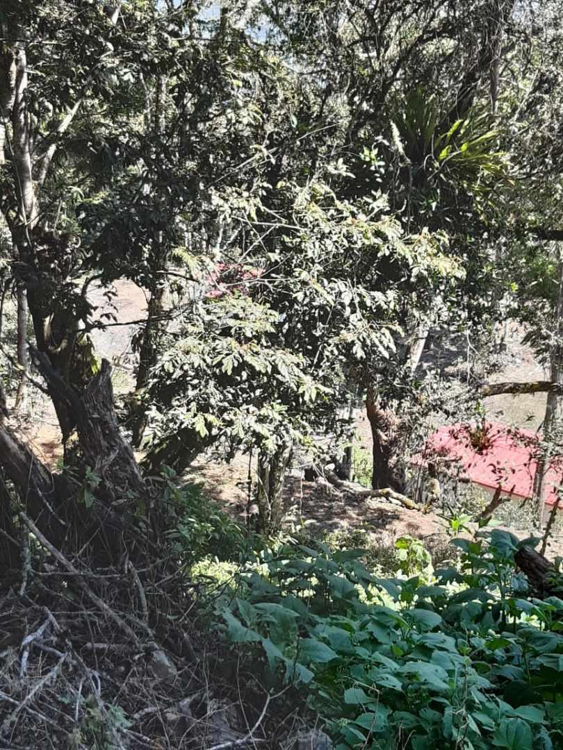 Terreno en Venta Coroico Foto 3